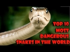 TOP 10 Most Dangerous snakes in the world