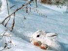 SKUPINA VETER bela snežinka